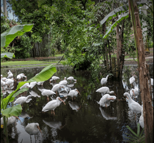 The Kid on The Go - Flamingo Gardens