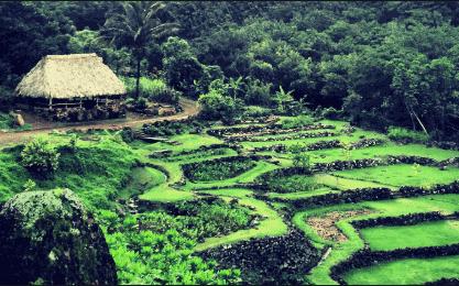 The Kid On The Go - Kampong, National Tropical Botanical Garden