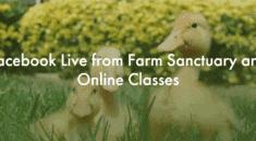 The Farm Sanctuary Classes