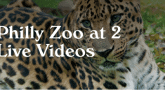 Philly Zoo at 2 on Facebook Live