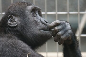 Top 6 Reasons To Take Kids To The Zoo