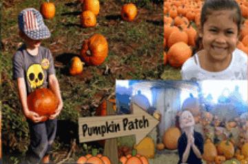 Pumpkin Patch - Miami, Florida - Event