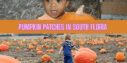 Pumpkin Patches in South Florida