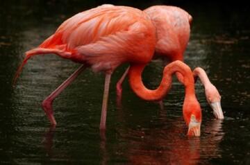 Flamingo Garden - flamingos