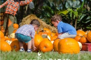 Pintos Farm - Pumpkin Patch at the Farm