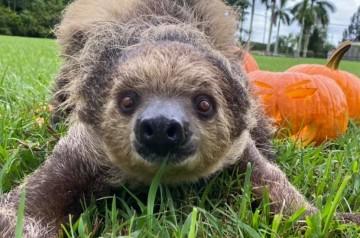 Animal Edventures Park - Spooky Safari Tour - Private Pumpkin Patches