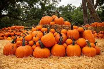 Ephiphany Lutheran Church and School - Pumpkin Patch - 2021