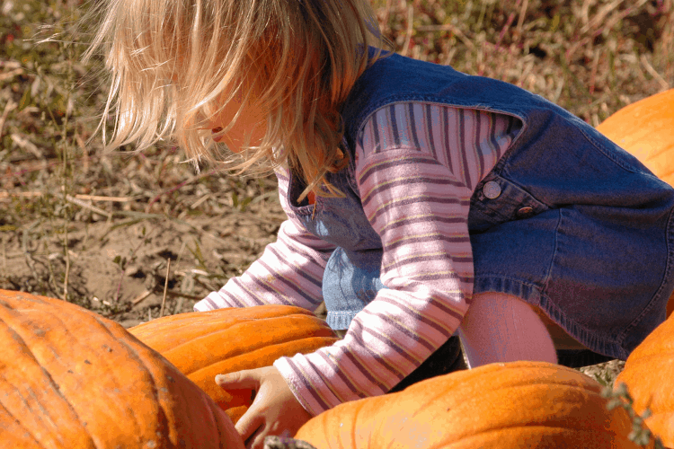 Girl Picking a Pumpkin