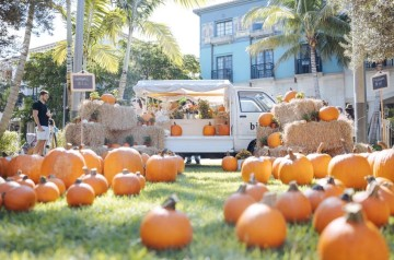 Rosemary Square - Pumpkin Patch